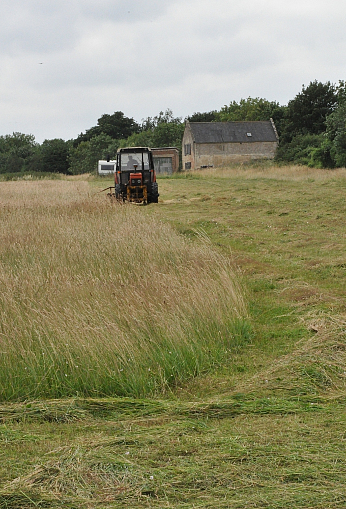 Possibly the last cut on the field threatened with development